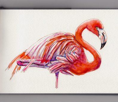 Flamingo Doodlewash