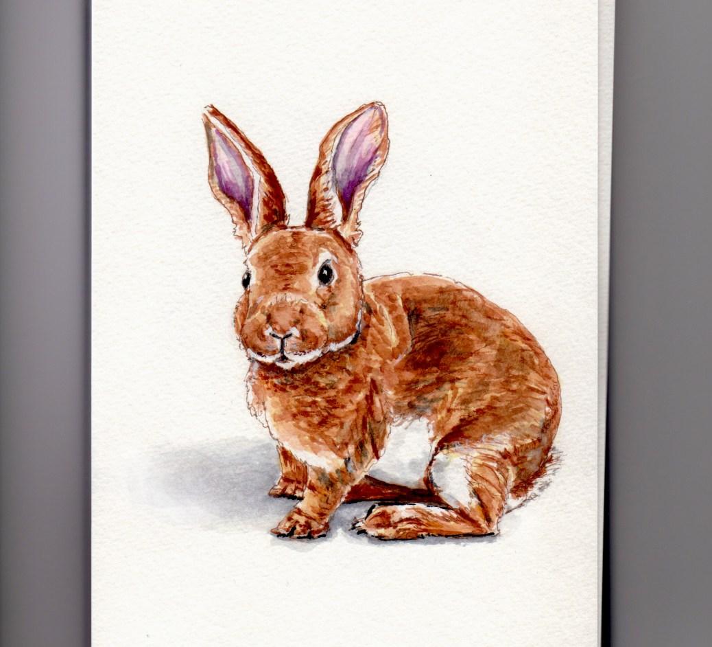 Rabbit Doodlewash