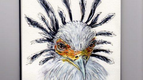 Secretary Bird Doodlewash - watercolor sketch of white bird with black feathers in sketchboook