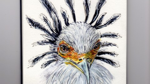 Secretary Bird Doodlewash - watercolor sketch of white bird with black feathers in sketchboook