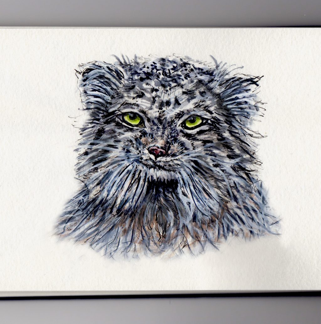 Doodlewash of Pallas's Cat - Watercolor painting and sketch of wild cat
