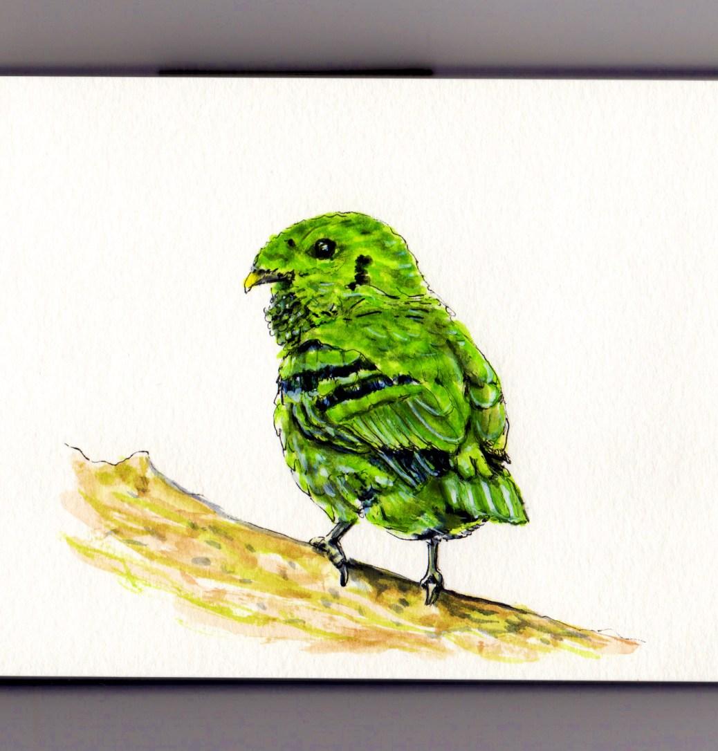 Green Broadbill Doodlewash Asian bird in green watercolor sketch and illustration