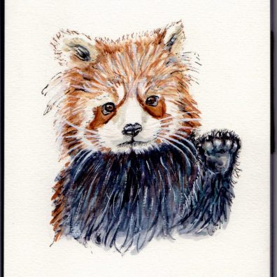 Red Panda Doodlewash - illustration and watercolor sketch and painting of red panda, lesser panda, red bear-cat, and red cat-bear