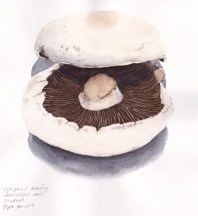 Doodlewash by Jane Blundell - Sketch of a mushroom in watercolour and pen watercolor drawing
