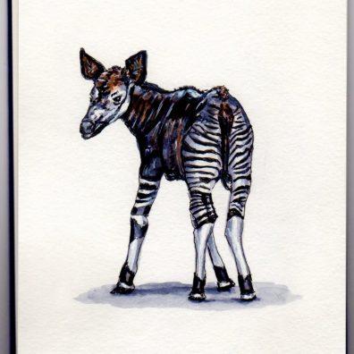 Okapi Doodlewash