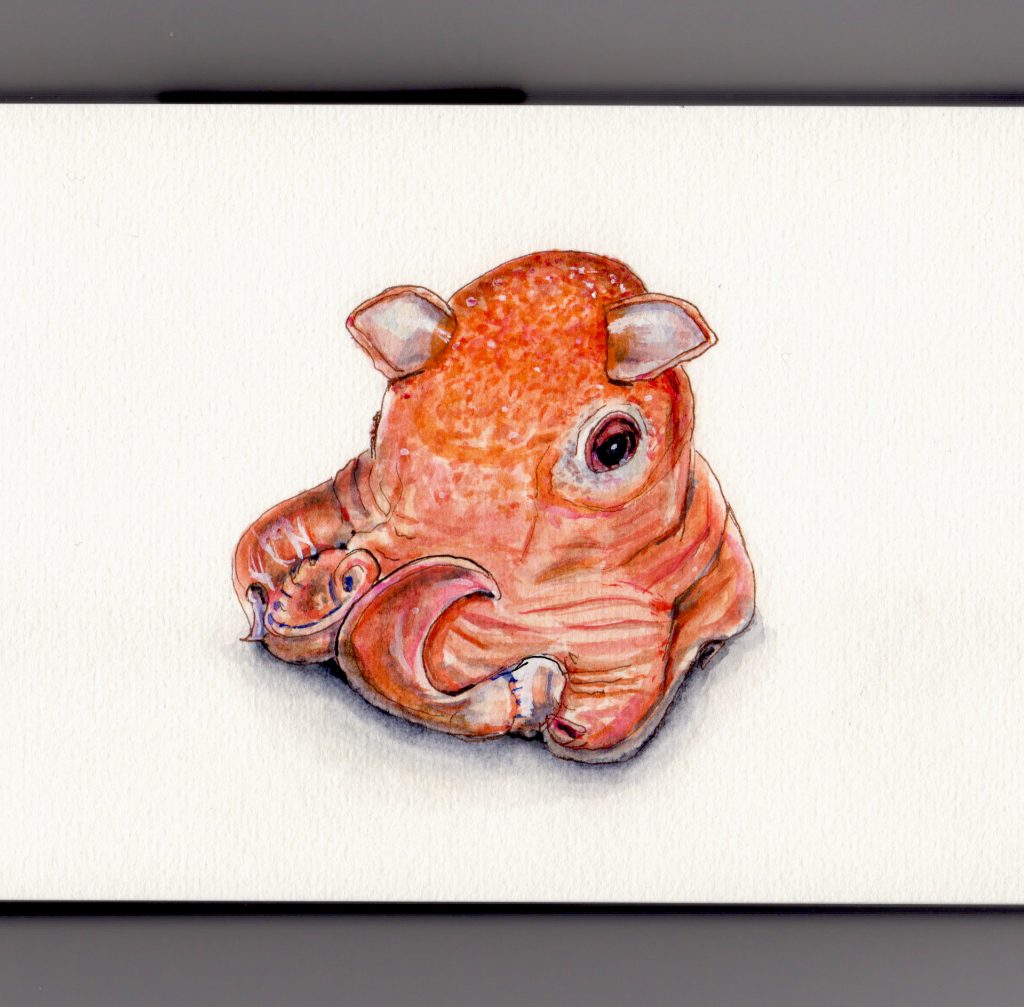The Opisthoteuthis Adorabilis Doodlewash by Charlie O'Shields