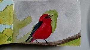 Doodlewash by Rob Nopola bird in watercolor sketchbook red and black