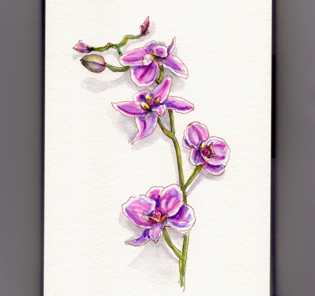 National Orchid Day - doodlewash and watercolor of pink orchids