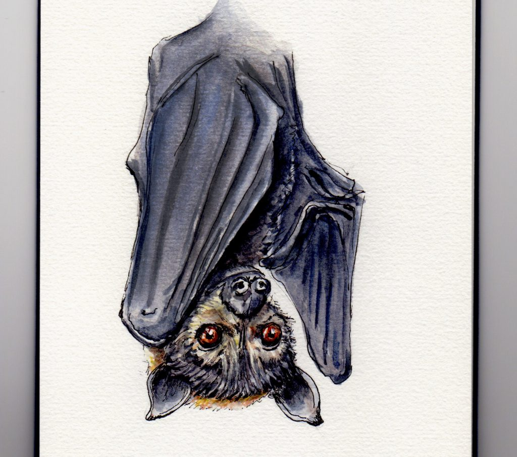 National Bat Appreciation Day - Doodlewash and watercolor painting of flying fox bat