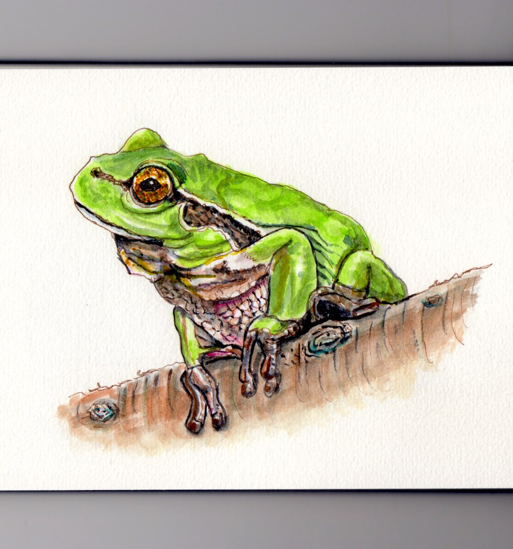 National Arbor Day Doodlewash - watercolor sketch of tree frog on tree branch