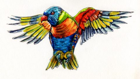 Doodlewash of a Rainbow Lorikeet - watercolor sketch of bird in flight