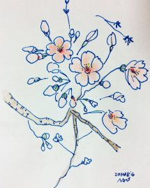 Doodlewash by Naoko Ebihara - watercolor sketch and painting of cherry blossoms