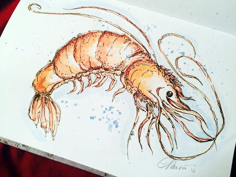 Doodlewash and watercolor sketch by Carolina Russo of Shrimp