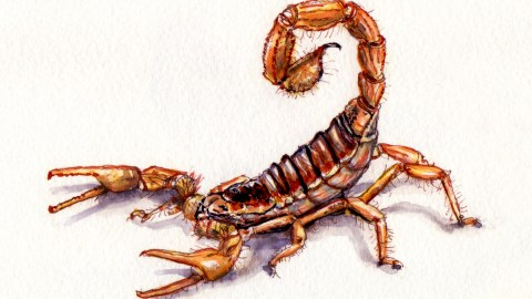 A Scorpion In The Night Doodlewash and watercolor sketch of yellow red scorpion