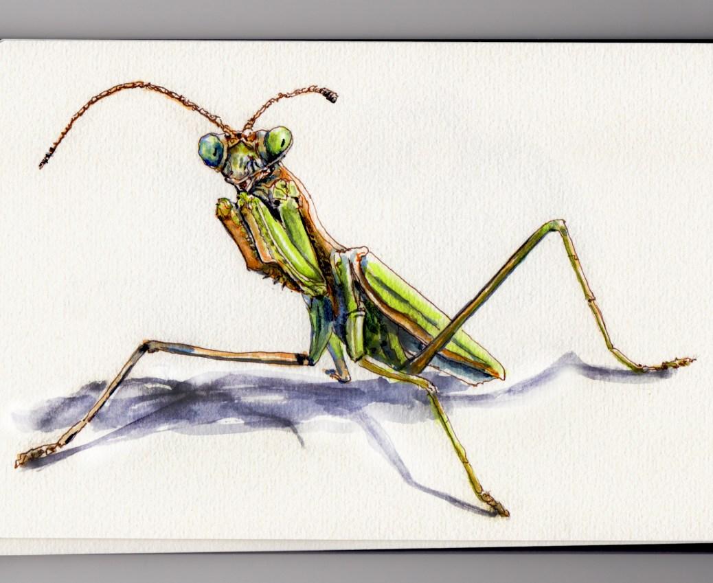 Doodlewash® - Odd Habits Of The Praying Mantis