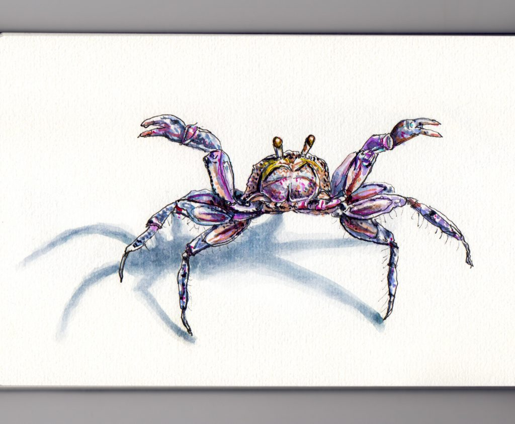 A Little Crab on the Beach Doodlewash and watercolor sketch on white background with shadow