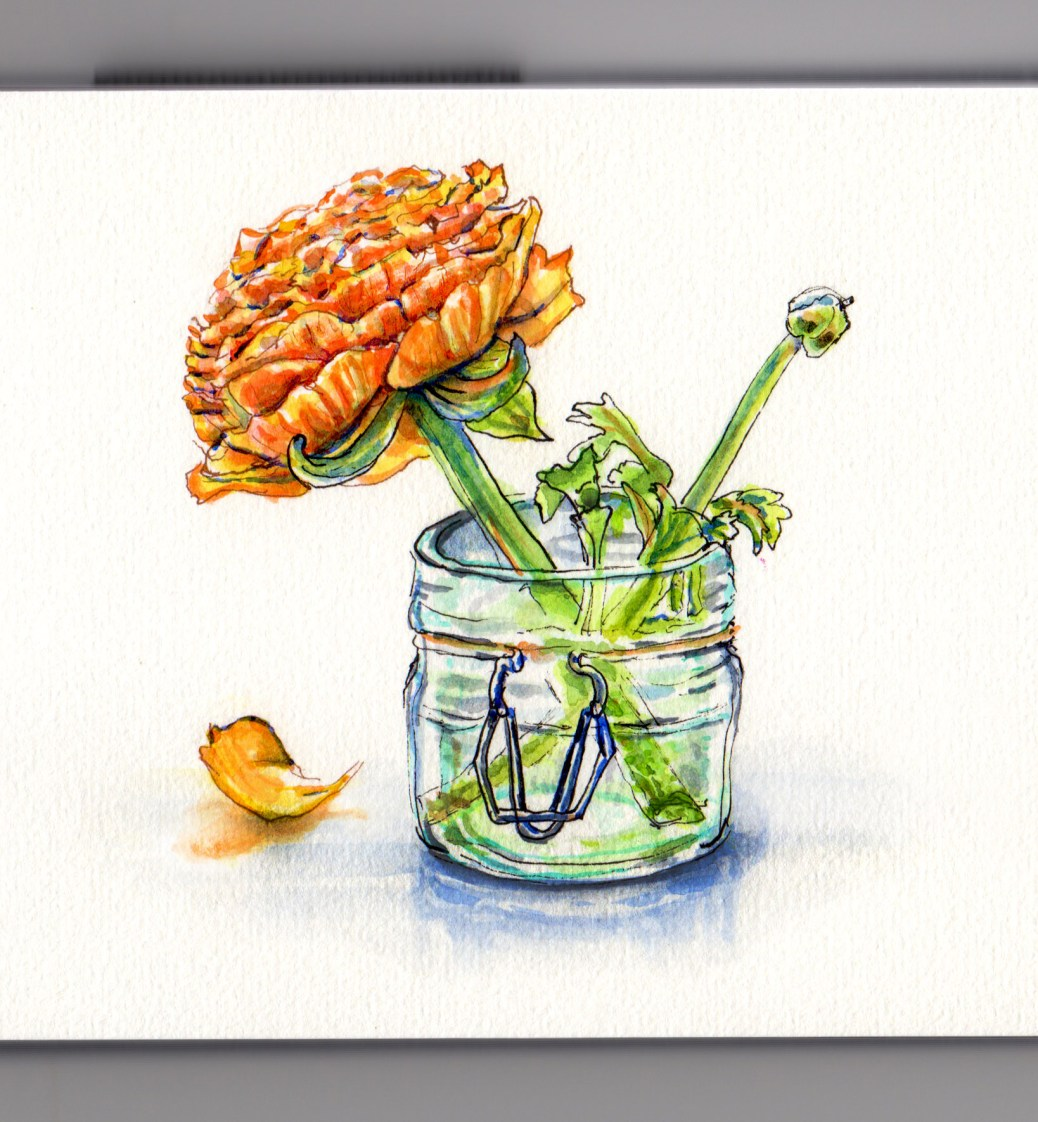 Doodlewash and watercolor sketch of orange ranunculus flower in glass mason chair on white background