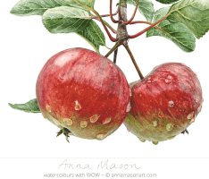 Doodlewash - Watercolor painting by Anna Mason of apples and leaves
