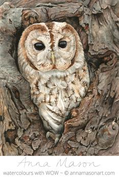 Doodlewash - Watercolor painting by Anna Mason of Owl in tree