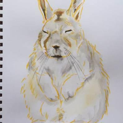 Teresa Robeson Doodlewash