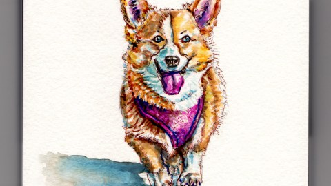 Day 10 #WorldWatercolorMonth Corgi Running in the sun