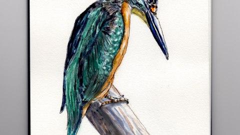 Day 8 #WorldWatercolorMonth Kingfisher