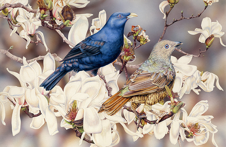 Doodlewash - watercolor painting illustration by Heidi Willis of Satin Bowerbirds