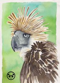 Doodlewash and watercolor sketch by Jeffrell Soliveres The Art Panda of eagle
