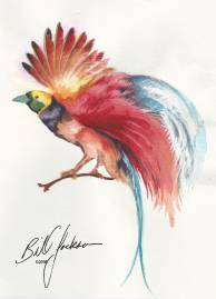 Doodlewash - Watercolor by Bill Jackson of Bird of Paradise