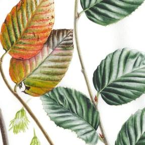 Doodlewash - Botanical Illustration by Işık Güner 6