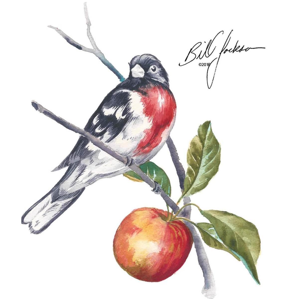 Doodlewash - Watercolor by Bill Jackson of Rose-Breasted Grosbeak