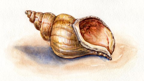 Day 9 #WorldWatercolorGroup Finding Seashells Are Love Letters In The Sand And Other Things