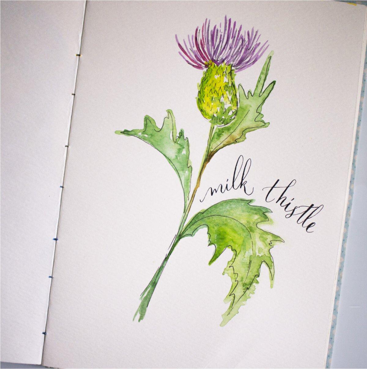 #Doodlewash - Watercolor by Sharmini Markandu - milk thistle - #WorldWatercolorGroup