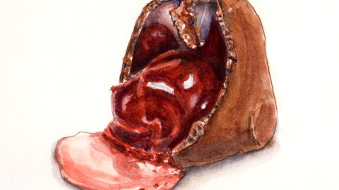 Day 15 - #WorldWatercolorGroup Sweetest Day Chocolate Covered Cherry watercolor painting