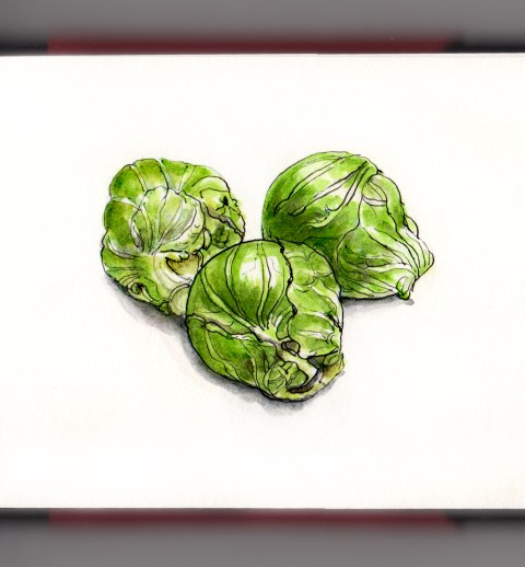Day 16 - #WorldWatercolorGroup Brussels Sprouts watercolor on white background