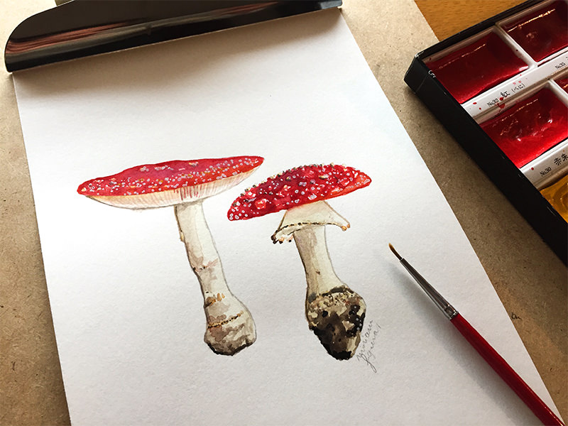 #WorldWatercolorGroup - Watercolor by Miriam Figueras of mushrooms - #doodlewash