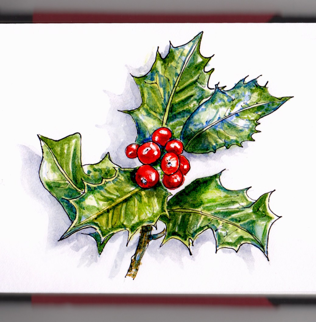 Day 16 - #WorldWatercolorGroup Holly Berries holly and the ivy poisonous
