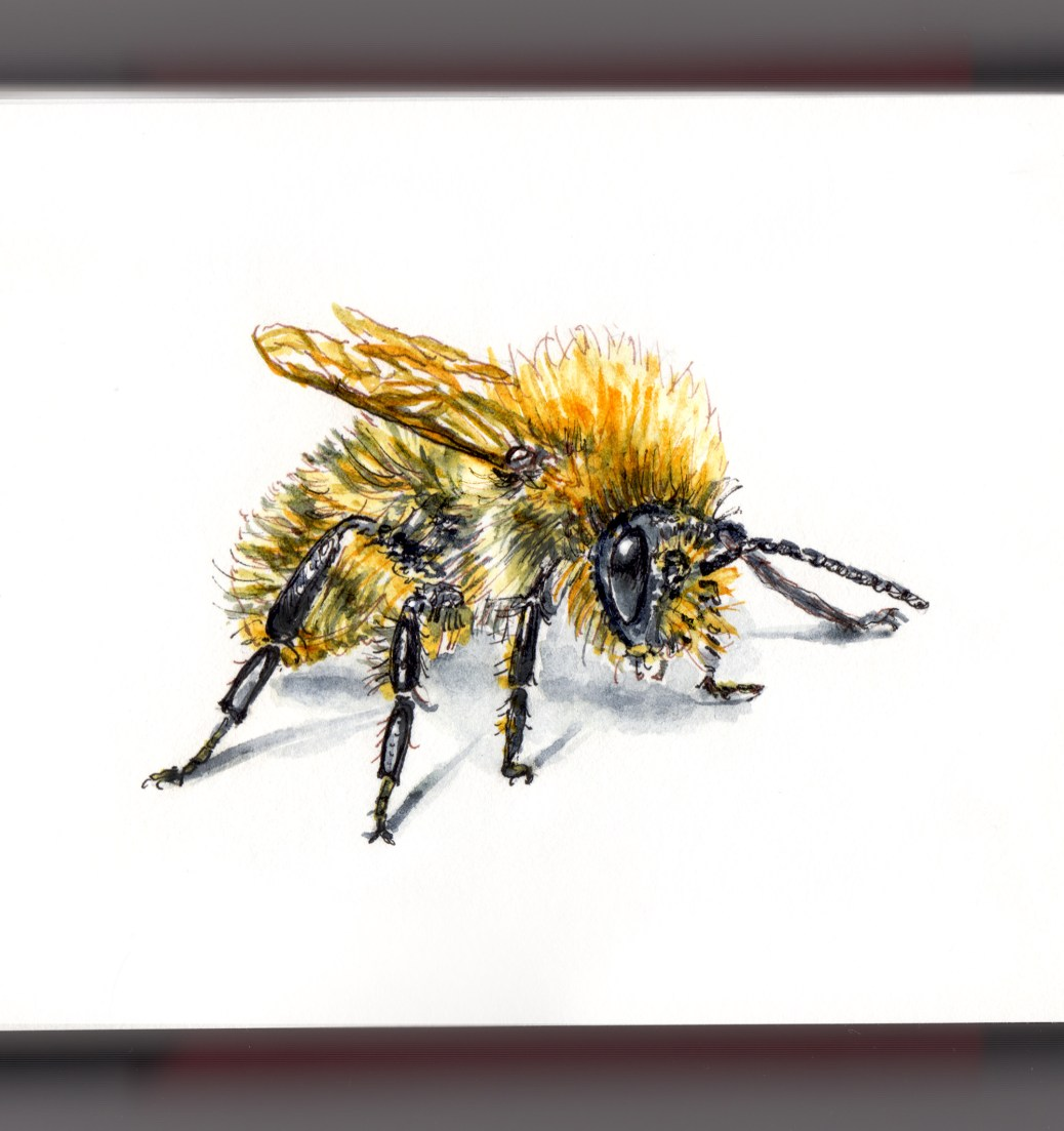 Day 22 - #WorldWatercolorGroup Flight of the Bumblebee White Background Watercolor Painting Insects
