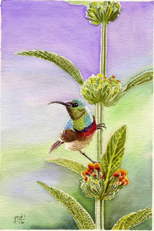 #WorldWatercolorGroup - Watercolor painting by Jodi Sones of hummingbird - #doodlewash
