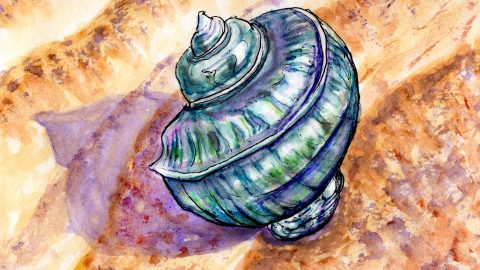 Day 17 - #WorldWatercolorGroup The Genie In The Shell Conical Shell pearlescent On Sand - Watercolor - #doodlewash