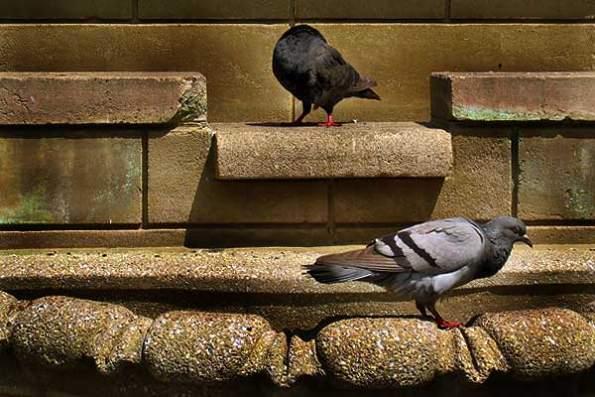 Headless Bird