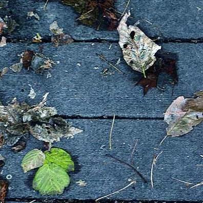 Littered Leaves
