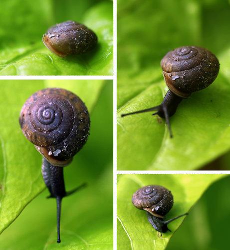Tale of a Snail