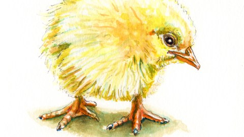 Day 20 - #WorldWatercolorGroup - Spring Chicken - Baby Chick Watercolor - #doodlewash