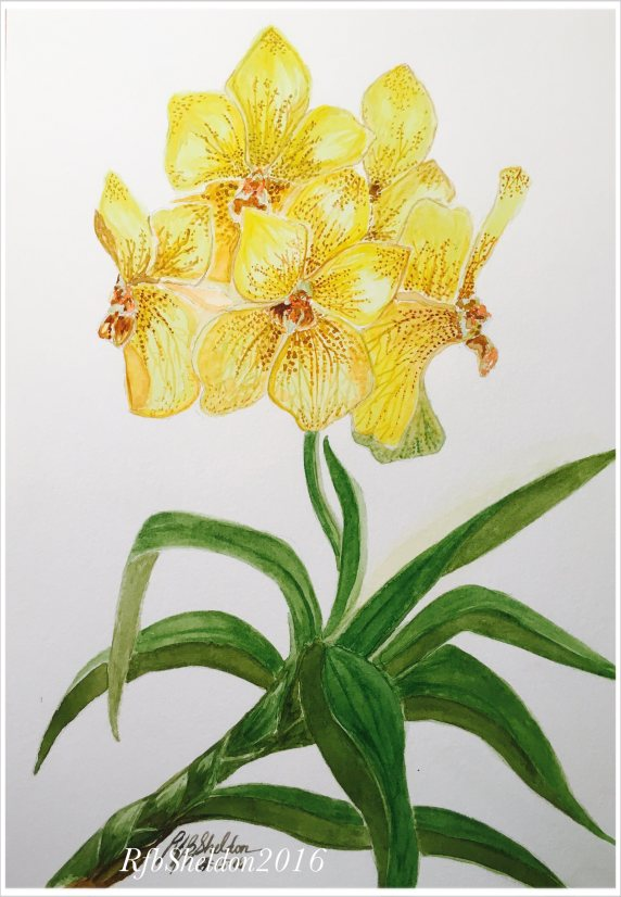 #WorldWatercolorGroup - Watercolor painting of yellow flowers by Rocelee F. Benedicto-Sheldon - #doodlewash