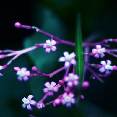 Tiny Blooms