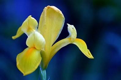 Insistent Yellow