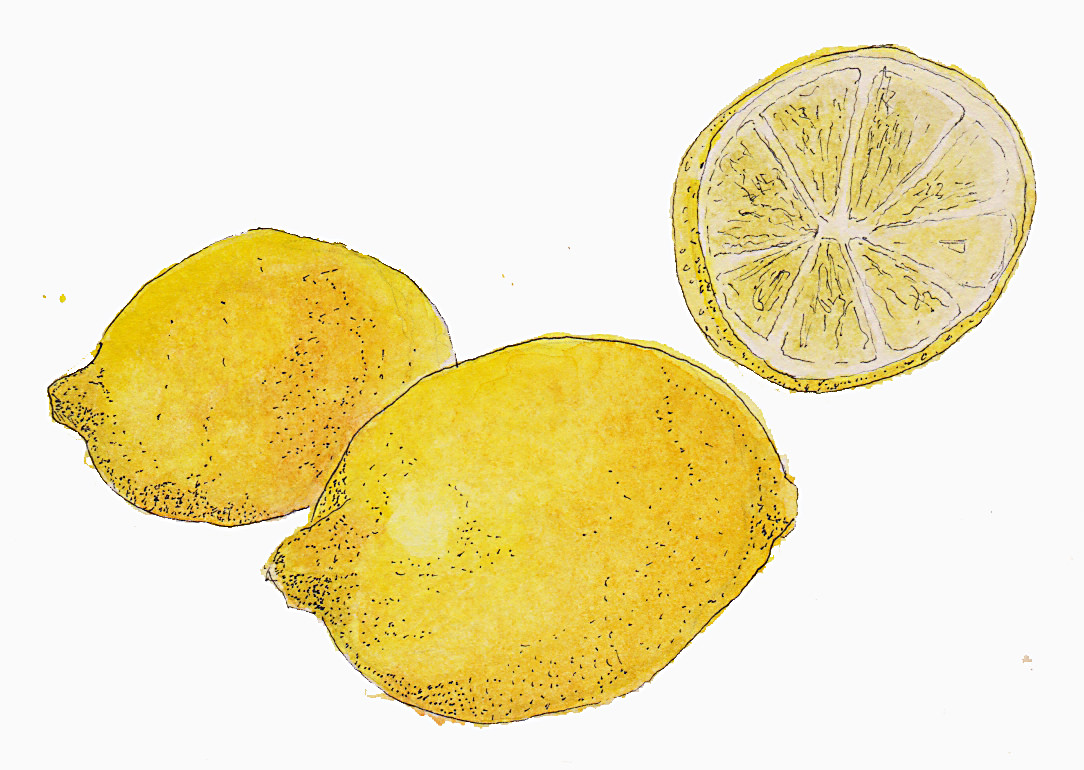 #WorldWatercolorGroup - Watercolor by Tim Soekkha of lemons - #doodlewash