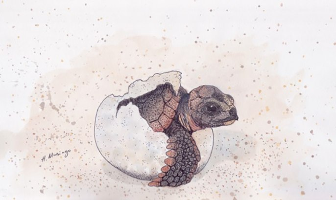 #WorldWatercolorGroup - Watercolor by Heather Musingo of baby turtle - #doodlewash