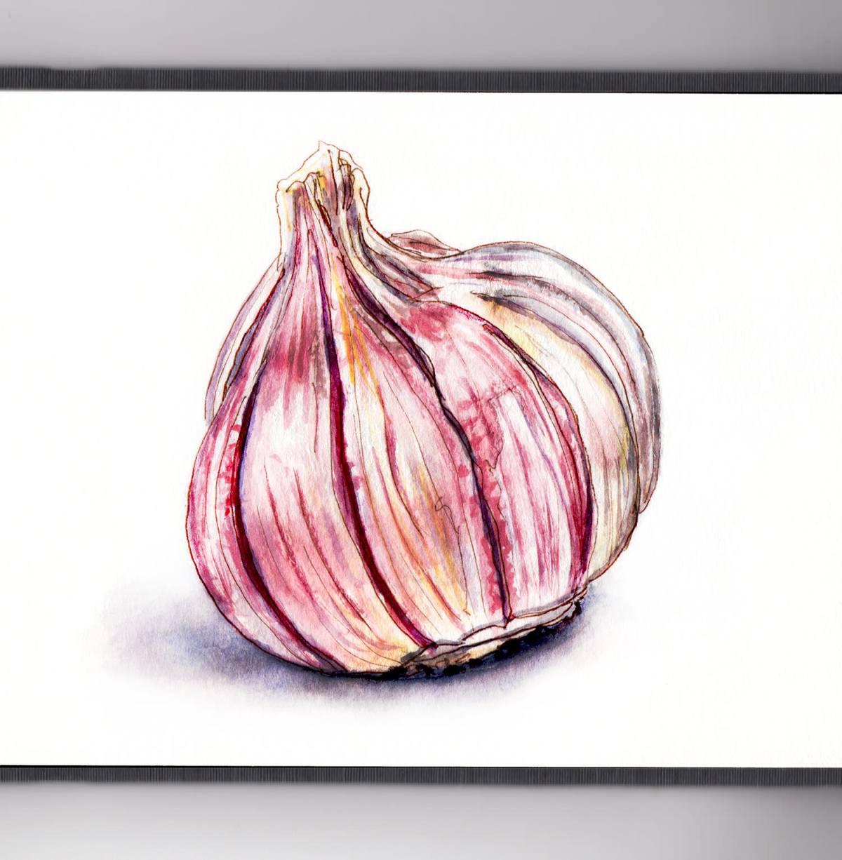Day 22 - #WorldWatercolorGroup - Bumpy Purple Garlic Cloves - #doodlewash